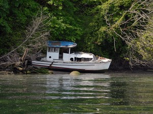 Derelict Vessel in Squaxin Passage.