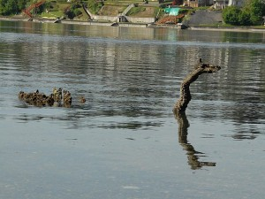 An old stump that reminded me of the Loch Ness Monster